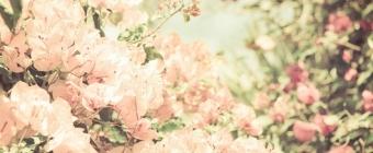 Wiosna - postaw na kwiaty!
