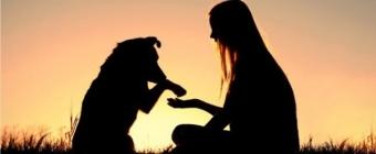 Pies a człowiek - czy nasz charakter ma wpływ na wybór pupila?